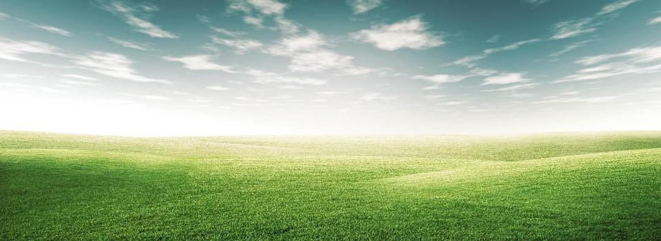 curvy-slider-grass-background-960x350